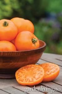 Bilde av Tomat, Drivhus- 'Orange Wellington Hybrid'