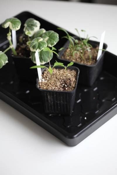 Plantebrett svart, torvbrikett