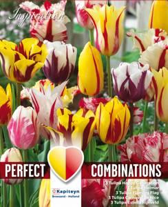 Bilde av Perfect Combinations - Fireworks - 15 stk
