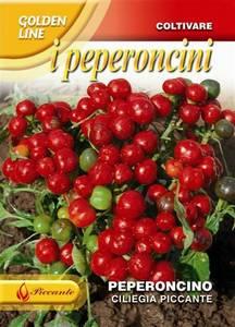 Bilde av Chilipepper 'Ciliegia Piccante'  - Capsicum annuum