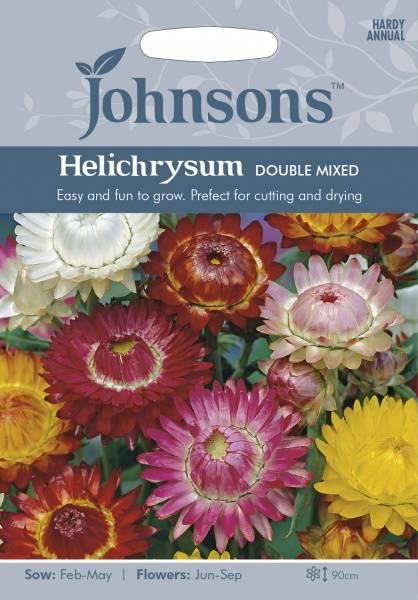 Høststråblomst 'Double Mixed' - Xerochrysum bracteatum