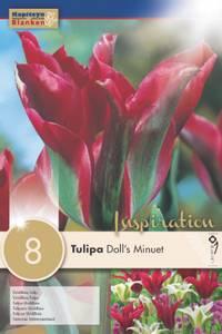 Bilde av Tulipan 'Doll's Minuet', Viridifloragruppen - 8 stk