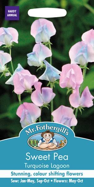 Blomsterert 'Turquoise Lagoon' - Lathyrus odoratus