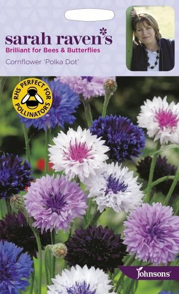 Kornblomst 'Polka Dot' - Centaurea cyanus
