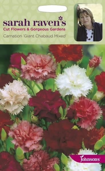 Nellik, hage- 'Giant Chabaud Mixed' - Dianthus caryophyllus