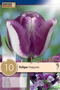 Bilde av Tulipan 'Hotpants', Triumphtulipan - 10 stk