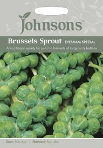 Bilde av Rosenkål 'Evesham Special' - Brassica oleracea