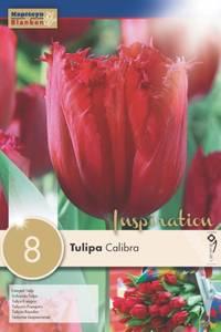 Bilde av Tulipan 'Calibra', Frynsetulipan - 8 stk