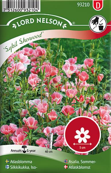 Atlasblomst 'Sybil Sherwood' - Clarkia amoena