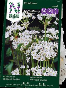 Bilde av Neapelløk - Allium neapolitanum - 25 stk