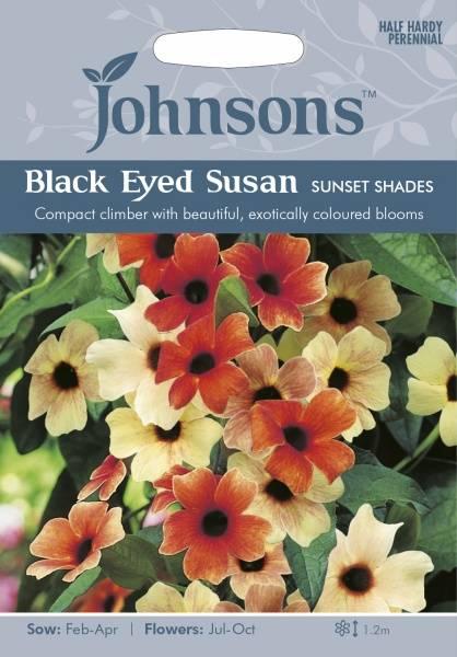 Vingethunbergia 'Sunset Shades'