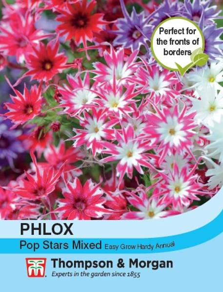 Sommerfloks 'Pop Stars Mixed' - Phlox drummondii