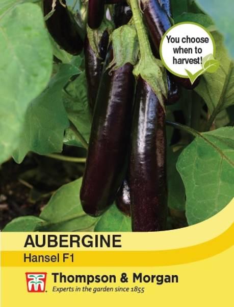 Aubergine 'Hansel' F1 - Solanum melongena