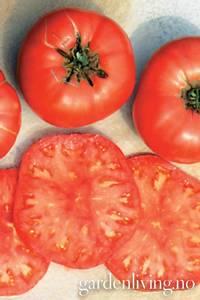 Bilde av Tomat, Drivhus- 'Brandywine Pink' (Sudduths strain)