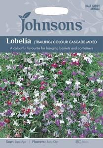 Bilde av Lobelia 'Colour Cascade Mixed' - Hengelobelia