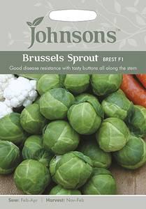 Bilde av Rosenkål 'Brest' - Brassica oleracea