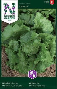 Bilde av Salat, Isberg- 'Calmar' - Lactuca