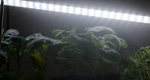 Bilde av LED-lys No.2 påbygglist 60 cm, 15W